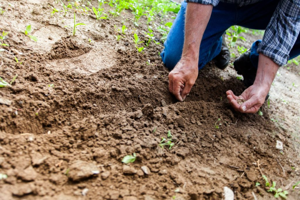 Man picking up seeds from the ground